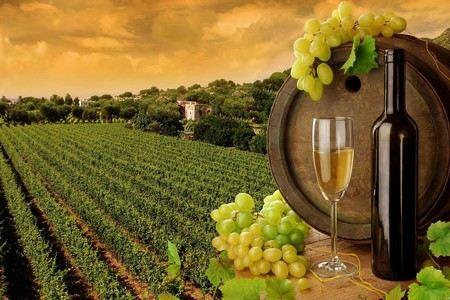 Бочка с вином и виноградник